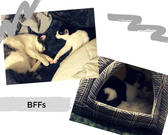 BFFs(image)