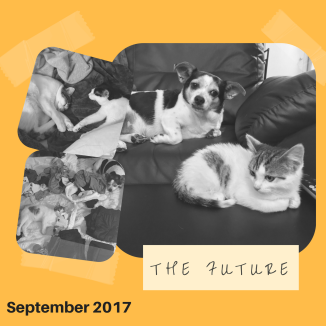 Sept(image)